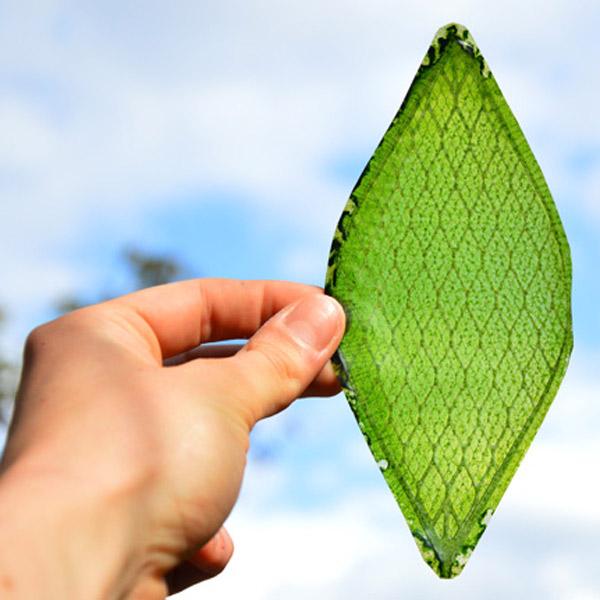 шелк, биоматериал, Шелковые листья для космических туристов