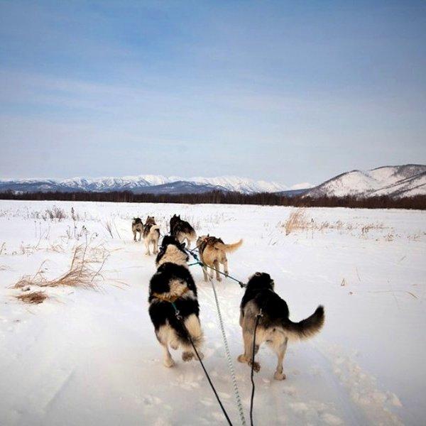 Исследование, биология, генетика, история, эволюция, общество, животные, природа, фауна, Генетики объяснили, почему собака стала другом человека