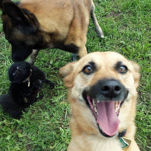 Исследование, психология, медицина, здоровье, организм человека, животные, мозг, Британцы разработали тест на IQ для собак